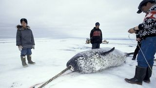 inuit_sea_ice_-thumbnail2.jpg